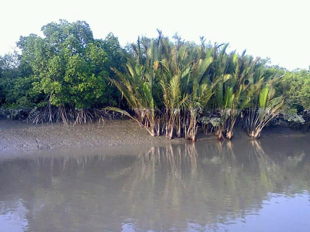 Sundarban Tour Package Booking