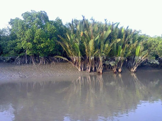 Sundarban Tour Package Booking