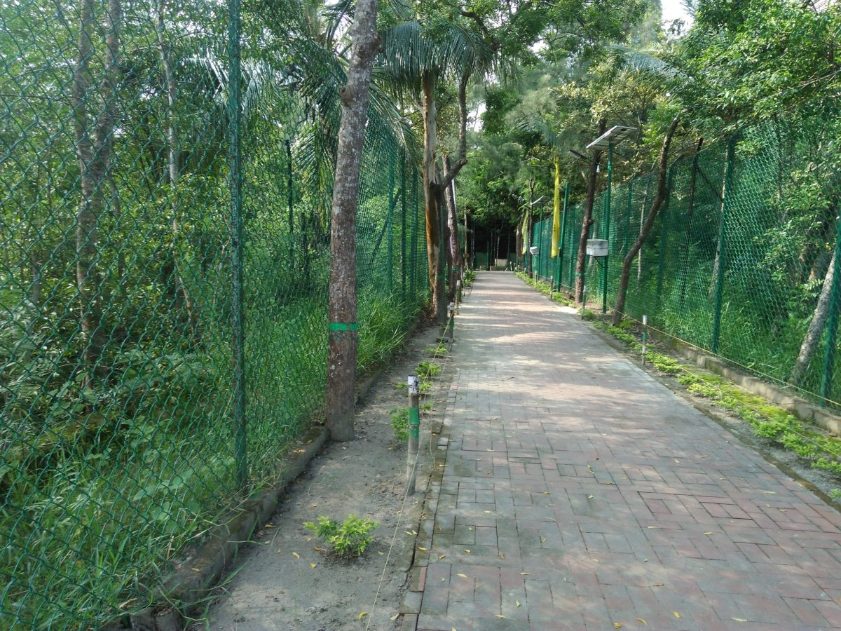 One Day Sundarban Tour Package