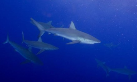 Seasickness and Swimming with Sharks
