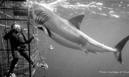 Scuba Diving with Chuck Nicklin, Underwater Cameraman