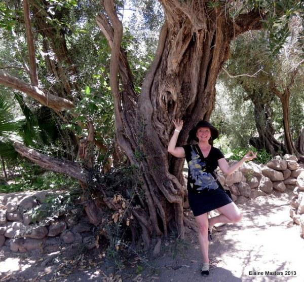 San Javier Olive Tree Mexcio, travel packing tips, trip wellness