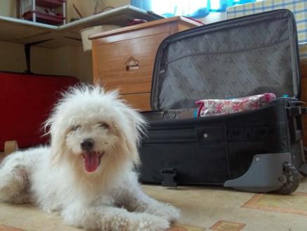 dog suitcase, suitcase