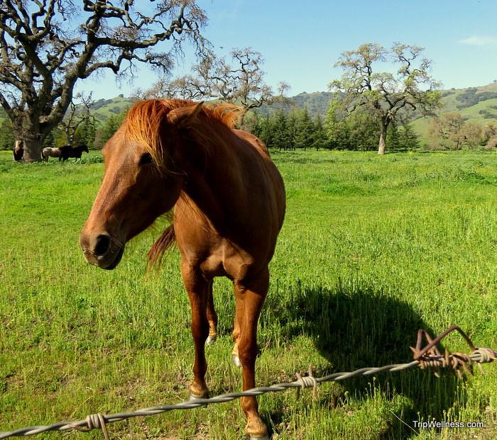 horses, John Steinbeck, tripwellness