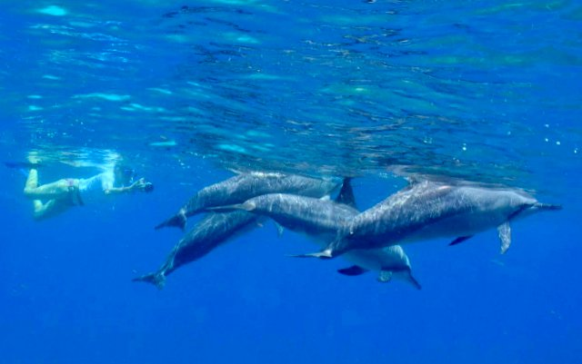 Spinner Dolphins at the surface, Kona Coast, Hawaii