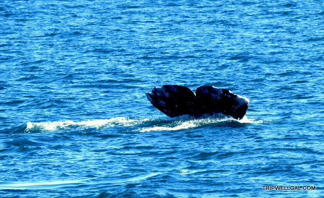 San Diego whale watching success