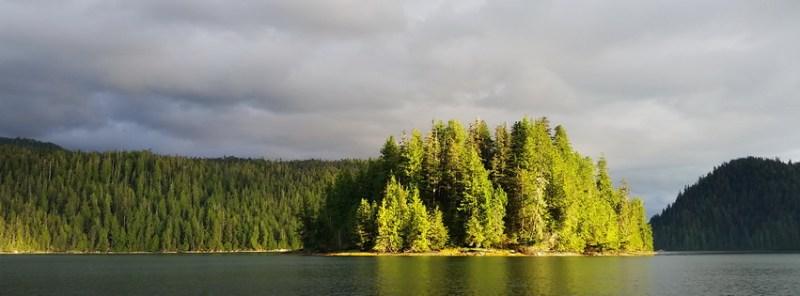 Wild edible mushrooms can be found in Southeast Alaska