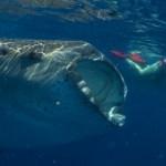 Not just a boy's club – Women Scuba Divers make a big splash