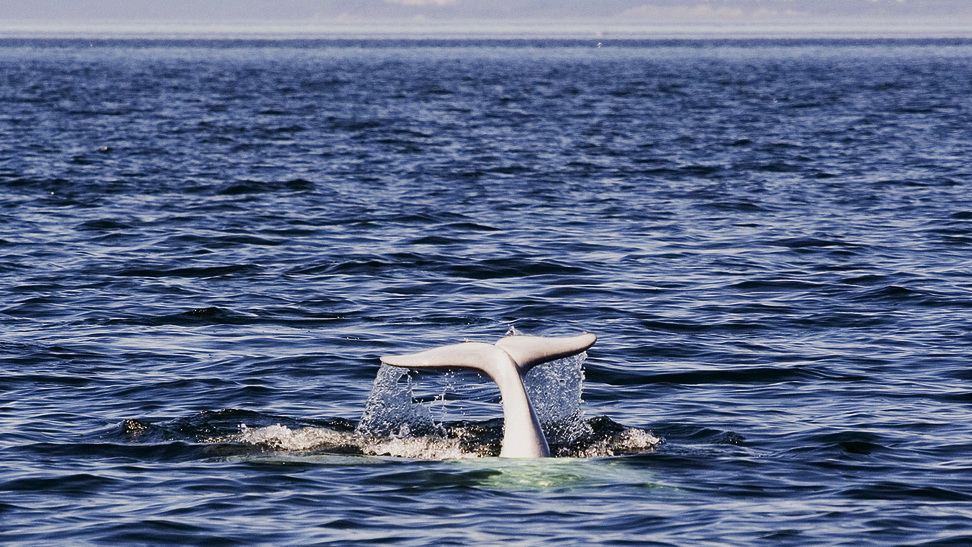 Tadoussac Quebec whale watching, indigenous cuisine and village life par excellence