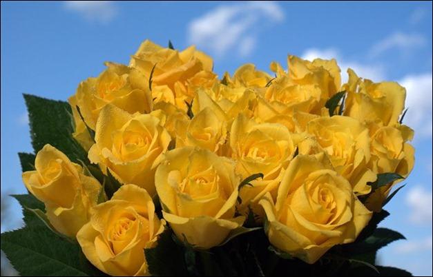 Yellow ARoses Bouquet
