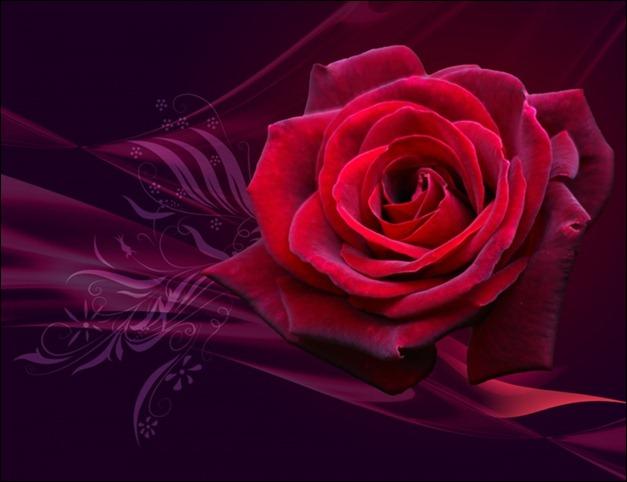magical_rose