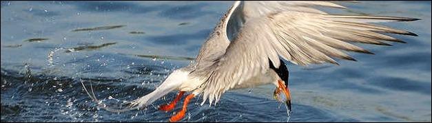 photos-of-birds-in-flight
