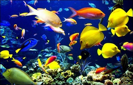 multi-color-fish