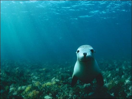sea-lion-encounter