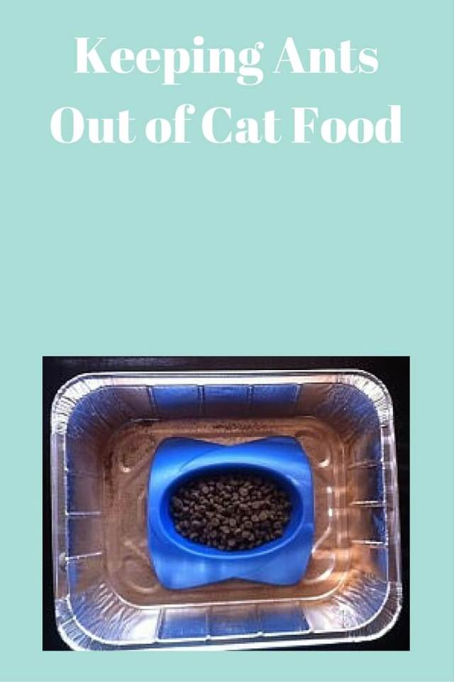 Keeping Ants Out of Cat Food