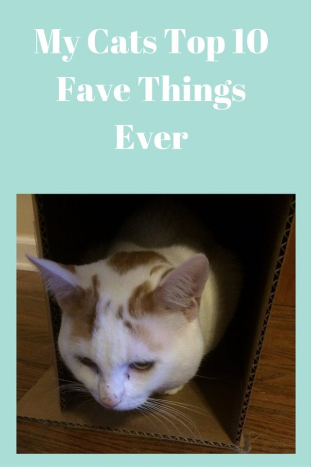 My Cats Top 10 Fave Things Ever