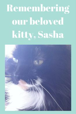 Remembering our beloved kitty, Sasha
