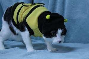 Winnie is wearing a Bumblebee Cat Costume