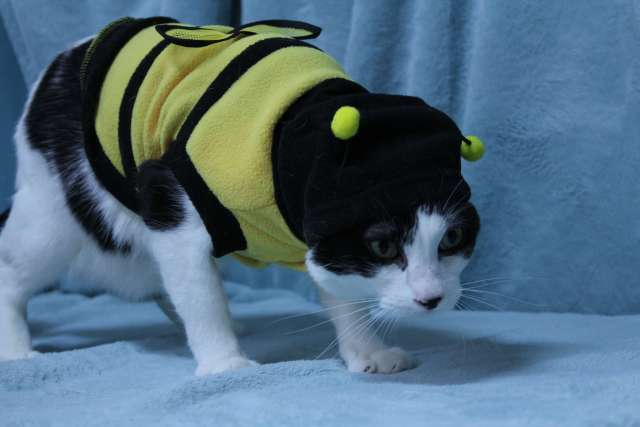 Winnie is wearing a Bumblebee Cat Costume