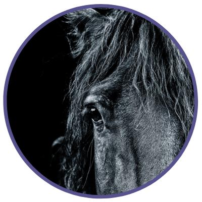horse communicator