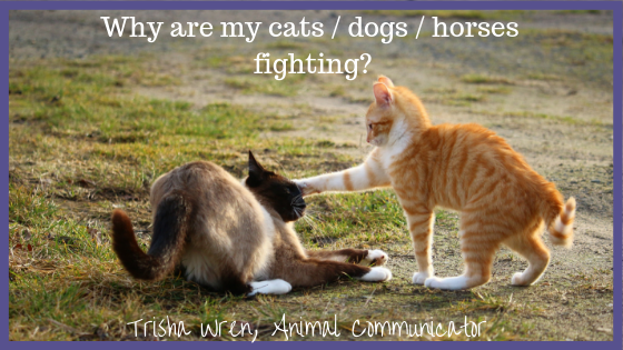 Help, my horses / dogs / cats are not getting along!