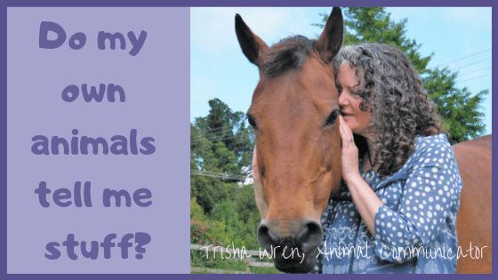 Can I talk to my own animals?
