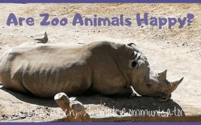 Are Zoo animals happy?