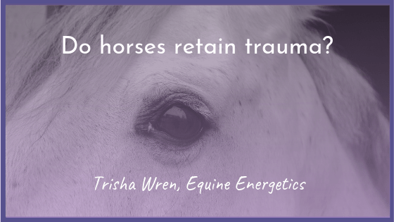 Do horses retain trauma?