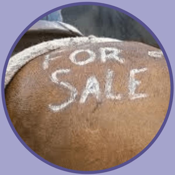 horse pre purchase check