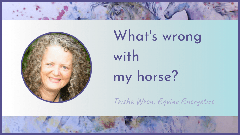 what's wrong with my horse free webinar