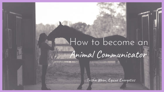 How to become an Animal Communicator