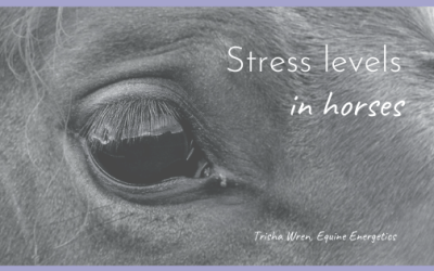 Stress levels in horses