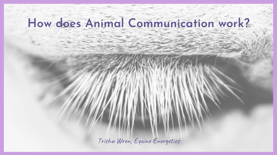 how does animal communication work