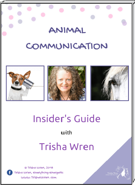 insiders guide to animal communication