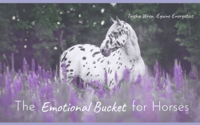 The 'Emotional Bucket' for Horses