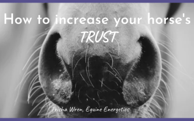 How to increase your horse's trust