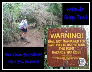 trish on waahili ridge trail