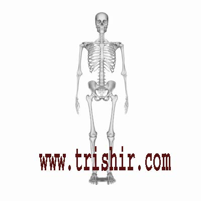Human Skeleton Buy Online Gifts & Products, Delhi (India)