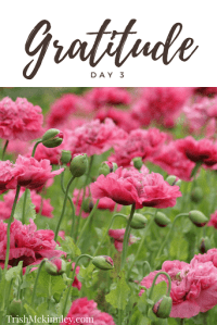 Picture of pink flowers with 'Gratitude Day 3' above it