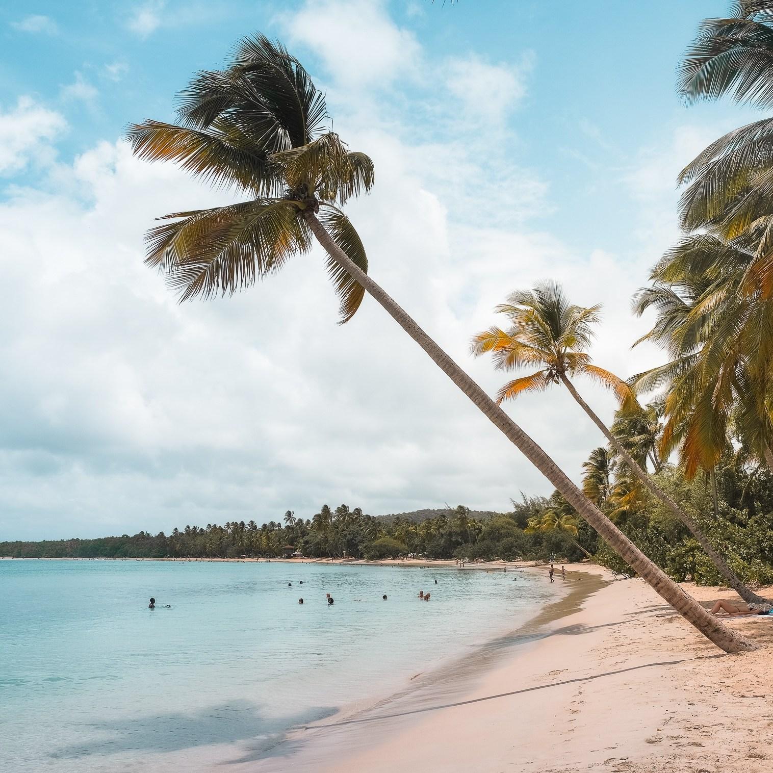 La carte postale de Martinique La Grande anse des salines