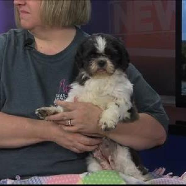 Pet of the Day - 5_27_15_9023484569178096734