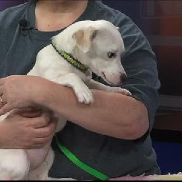 Pet of the Day - 6_3_15_-7454200801919217705