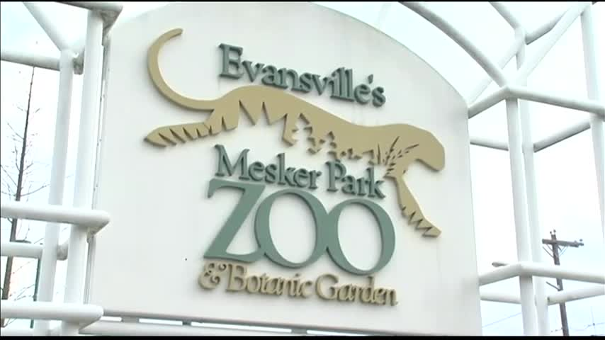 Mesker Park Zoo Plans to Add Penguin Exhibit