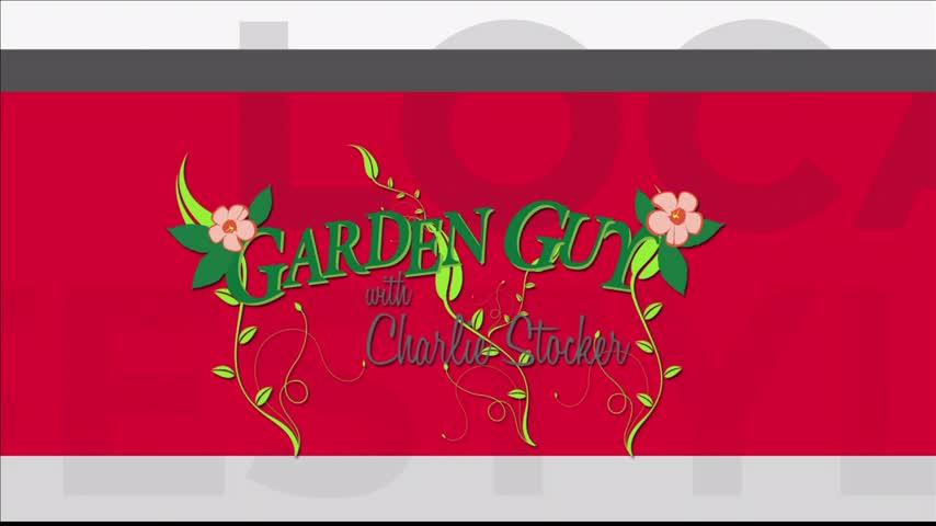Garden Guy Charlie Stocker Takes Your Calls (1/9/17)