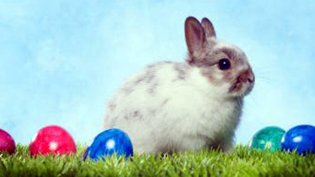 Easter eggs (2)_3217314482262649-159532