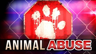 Animal Abuse_1516761011919.jpg.jpg