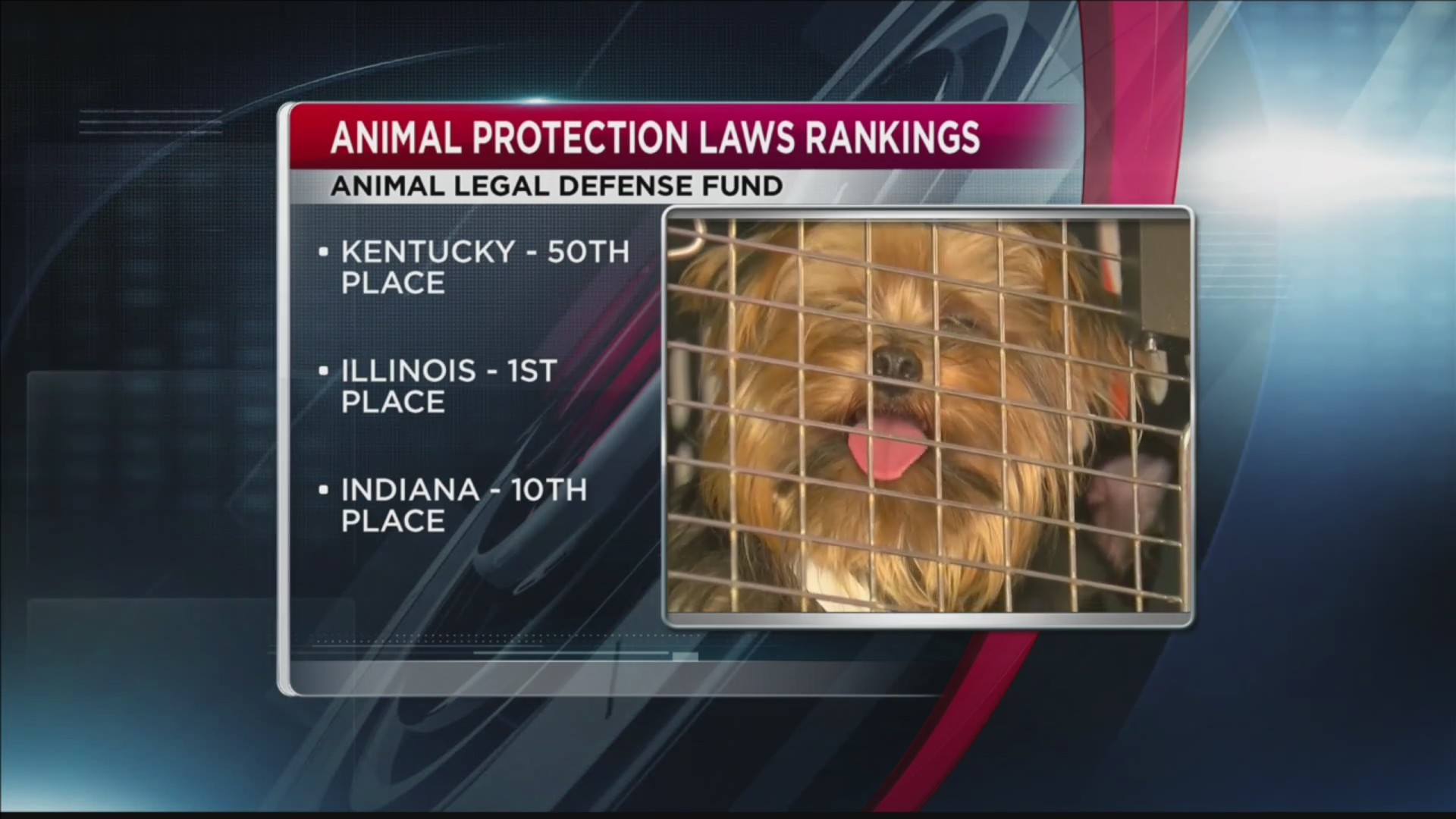 Animal Rankings