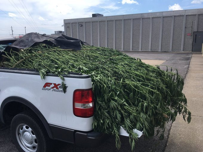 $250,000 Worth Of Marijuana Found On Tri-State Man's