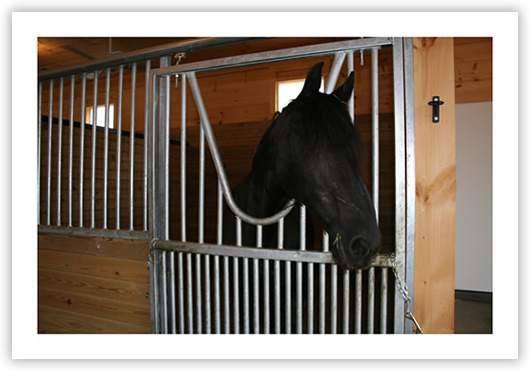 Horse stalls: pressure treated wood