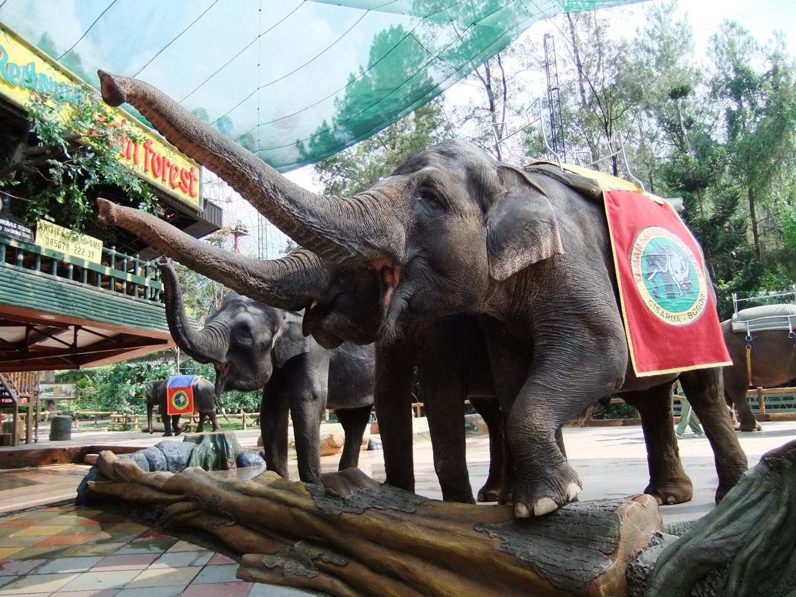 Wisata Taman Safari Bogor Puncak yang wajib dikunjungi
